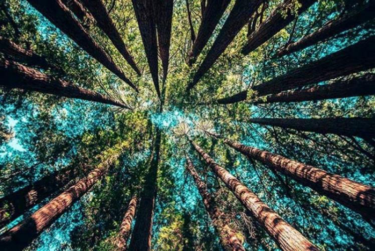 Vier de Dag van de Aarde