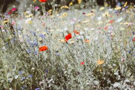 Vandaag vieren we de Dag voor Biodiversiteit.